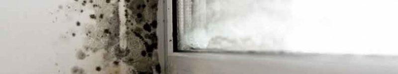 Muffa e domotica: come mitigare il problema tramite Home Assistant